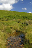cornwall dartmoor英国 库存照片