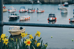 Cornwall harbour boats with daffodils royalty free stock photos