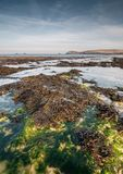 Cornwall krajobraz Obrazy Royalty Free