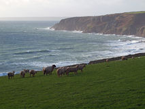 Cornwall kustlinje nära Trewavas Royaltyfri Foto