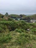Cornwall, Kynance zatoczka Obraz Royalty Free