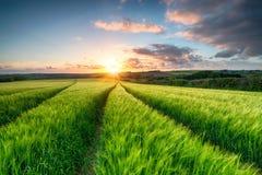 Cornwall-Landschaft Stockfotografie