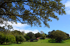 Cornwall Park in Auckland New Zealand Stock Image
