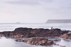 Cornwall seascape and perched cormorant. Royalty Free Stock Images