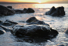 Cornwall sunrise wet rock in the sea close up Royalty Free Stock Photos