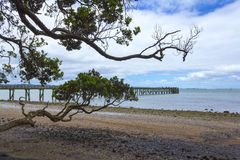 Cornwallis Wharf Auckland New Zealand. Beach and Park Royalty Free Stock Image