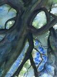 Coroa da árvore Imagens de Stock