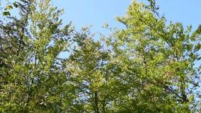 Coroa da árvore no outono vídeos de arquivo