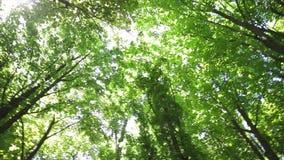 Coroa das árvores na floresta vídeos de arquivo