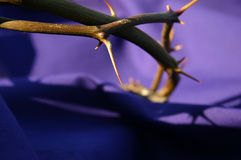 Coroa de espinhos Fotografia de Stock Royalty Free
