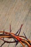 Coroa de espinhos fotos de stock