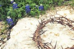 Coroa de espinhos na terra rochosa com Texas Bluebonnets imagem de stock
