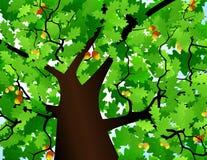 Coroa de uma árvore Fotos de Stock Royalty Free