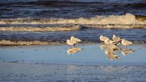 Coroa do suporte da gaivota no beira-mar Liberdade da felicidade e forma facil de vida Foto de Stock