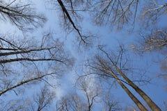 Coroas da árvore e o céu fotos de stock