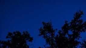 Coroas da árvore na noite Fotografia de Stock Royalty Free
