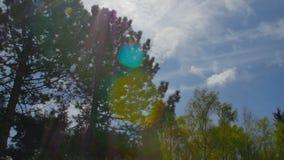Coroas da variedade da floresta das árvores na primavera contra o céu azul com o sol Vista inferior das árvores filme