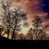 Coroas das árvores no crepúsculo Fotografia de Stock