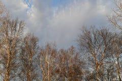 Coroas das árvores no fundo das nuvens imagem de stock royalty free