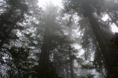Coroas das árvores no parque nacional da sequoia vermelha, Califórnia EUA fotos de stock