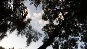 Coroas pretas da árvore fotos de stock royalty free