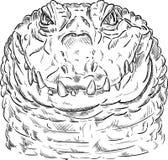 Corocodile with neck Royalty Free Stock Image