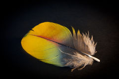 Corolful feather Royalty Free Stock Photo