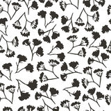Corolla flower dill seamless pattern Stock Photography