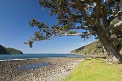 Каменистый залив, Coromandel, Новая Зеландия стоковое изображение