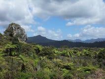 Coromandel bush. Moehau Mountain in distance. New Zealand bush, Coromandel Stock Photos