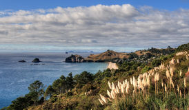 Coromandel Coast Stock Images