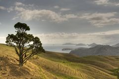 Coromandel Coast. Rolling hills and tree with background islands, New Zealand Coromandel region Royalty Free Stock Image