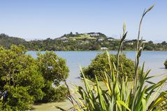 Coromandel New Zealand. A view over New Zealand native flax and New Zealand mangrove to the town of Coromandel in the Coromandel Peninsula, New Zealand. Focus on Royalty Free Stock Photography