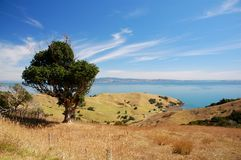 Coromandel Peninsula Royalty Free Stock Photography