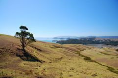 Coromandel Peninsula Stock Images