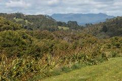 Coromandel Peninsula countryside Stock Photos