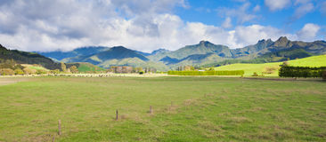 Coromandel Peninsula NZ mountain pasture scenery Stock Images