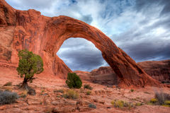 Corona Arch. Against Stormy Sky with Juniper Tree in Foreground Royalty Free Stock Photo
