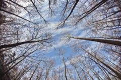 Corona de árboles con el cielo azul Imagen de archivo
