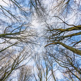 Corona de árboles con el cielo azul Fotografía de archivo