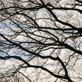 Corona de árboles con el cielo azul Imagenes de archivo