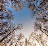 Corona de árboles con el cielo azul claro Imagenes de archivo