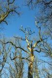Corona de árboles debajo del cielo azul Fotografía de archivo libre de regalías