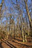Corona de árboles debajo del cielo azul Imagen de archivo libre de regalías