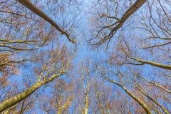 Corona de árboles debajo del cielo azul Fotos de archivo