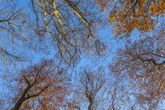 Corona de árboles debajo del cielo azul Foto de archivo libre de regalías