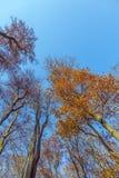 Corona de árboles debajo del cielo azul Imagen de archivo