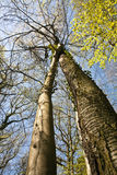 Corona de árboles en luz hermosa Imágenes de archivo libres de regalías
