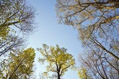 Corona de árboles en luz hermosa debajo del cielo azul Fotos de archivo