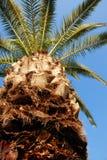 Corona de la palma Imagen de archivo libre de regalías